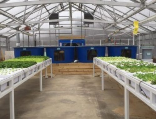 100 Gardens Aquaponics Course Development